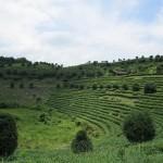 Herbaciane pola Yangshuo