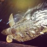 Pewnego razu w Centrum Ochrony Żółwii Morskich