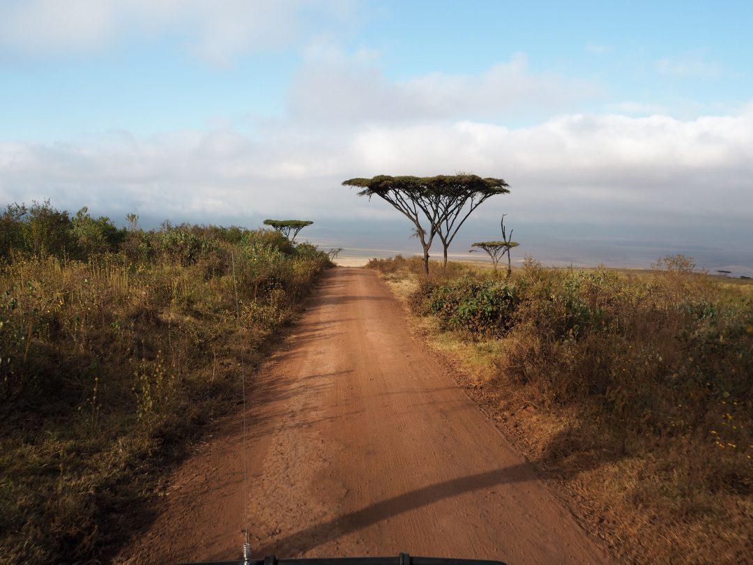 Martyna Skura, Tanzania, Ngorongoro, safari