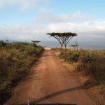 Najpiękniejsze miejsce na świecie – Ngorongoro [galeria zdjęć]