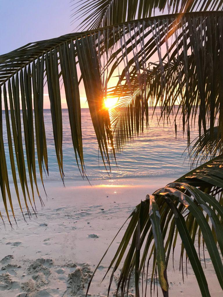 cached słońca na Malediwach, plaża, palmy, pomarańczowe słońce zachodzi na horyzoncie