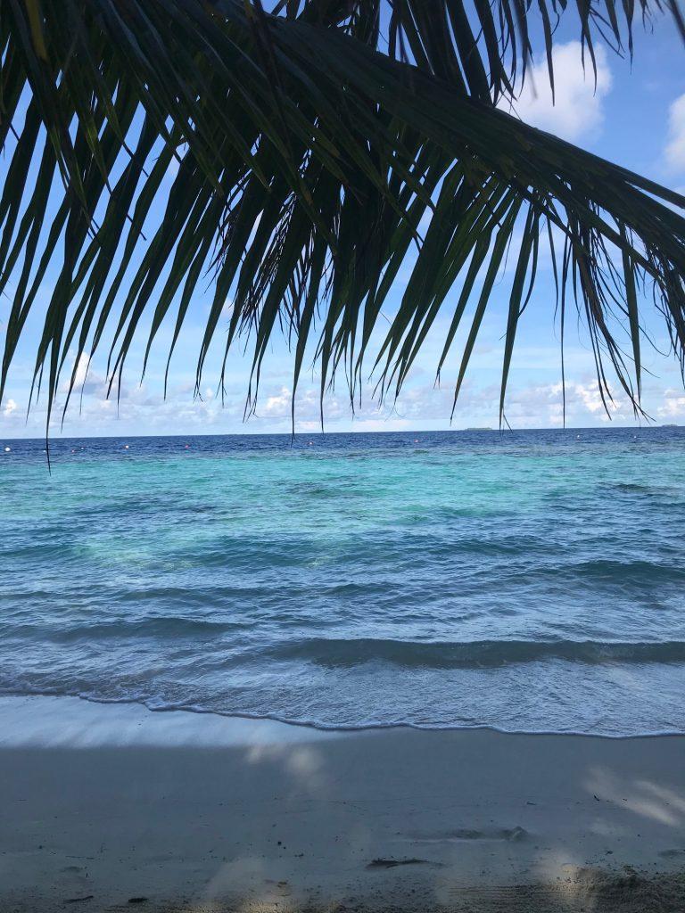 Widok oceanu, turkusowa woda, palmy, niebieskie czyste niebo